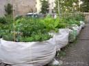 Co je to komunitní zahrada