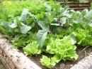 Ze zahrady na talíř