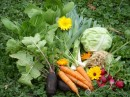 Pěstujeme zeleninu