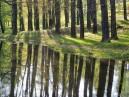 Dešťové tůně v Lochotínském parku