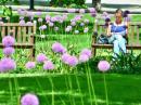 Psychologický, zdravotní a sociální význam zeleně